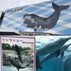 珍しいクジラショーは必見!太地町立くじらの博物館