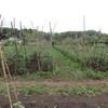 農園日誌ー野菜の宅配PARTⅢ-自然環境の変化と農業現場の対応