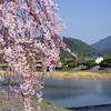 妻の誕生日に、伏見稲荷大社でずぶ濡れになり、嵐山で桜を満喫できた休日