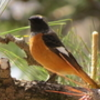 明石公園の春の鳥たち