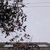 作曲工房 朝の天気 2018-03-16(金)くもり時々雨
