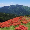 5月の青空と赤い絨毯、大和葛城山。