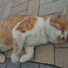 イクメン猫ダイちゃんと、チチ離れの予感