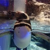 1歳10ヶ月の娘とすみだ水族館(スカイツリー)に行ってきた。大江戸の金魚ワンダーランド!