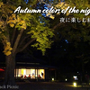 【Autumn leaves】Autumn colors of the night / Rikugien @KOMAGOME