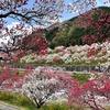 2021年 月川温泉郷「花桃の里」に行ってきました