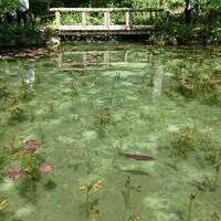 5月・初夏のモネの池