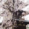 興福寺・三重塔のしだれ桜