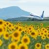 ANAカレンダー撮影地を訪れる! ひまわりと飛行機のコラボレーション高松! 旅行記