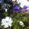 咲くやこの花