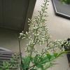 きょうの庭作業と庭の花