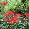 「まつこの庭」の秋の草花(1)