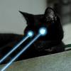 見張り台で見張り番を務める黒猫は早朝5時に出勤です。猫は高い所が大好き
