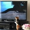 日々是好猫:気分だけでも世界ネコ