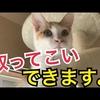 飛び跳ねながら『取ってこい』する子猫がかわいすぎる!