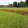 農園日誌Ⅲーむかし野菜の四季ー日本の農業の原点