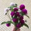 5-130   愛すべき花たち〜千日紅をドライフラワーに〜