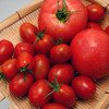 トマト、ミニトマト