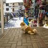 【一日一枚写真】マチュ・ピチュ村の犬達 Part.4【一眼レフ】