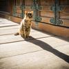 【171】文京区大塚 猫が佇む護国寺