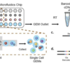 Single Cell RNA-seq解析で使用されるプロトコルのご紹介
