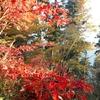 奥多摩登山11月〜紅葉に癒された大岳山と御岳山