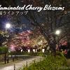 【桜情報2019】夜桜をカメラにおさめるなら千鳥ヶ淵緑道  @千鳥ヶ淵