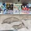 【山梨〜静岡旅行】伊豆・水戸シーパラダイス【その③】