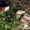 ビオラとワイヤ―プランツを寄せ植えにしました