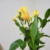お花をいただきました。