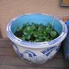 金魚鉢、見つける