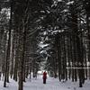 冬の森歩きを体験してみた(ワークショップの案内あり)