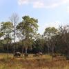 タイ旅行 〜クイブリナショナルパークで野生のゾウに会う〜