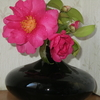 庭の山茶花と名も知らない植物たち