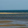 🦜野鳥特捜隊【136】数千羽いる水鳥から種類を見極める