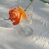 庭で花咲くバラやスイートバイオレットなど