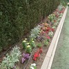 夏花壇植替え