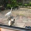 新型コロナと野良猫問題