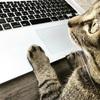 邪悪なホース破断事件と、デジタルネイティブ猫の謎!