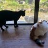野良猫調査結果