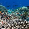 Mengenali Hasil Perikanan Indonesia