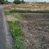 長畝のジャンボ落花生の除草の続き