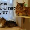 猫と雨 天気の悪い日は寝て過ごします!