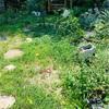 昨日のお庭とイラスト