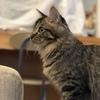 猫の大学病院①