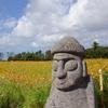 済州島(チェジュ島)フォトスポット #カラフルなコスモス畑「済州焼酎工場」