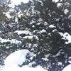 厳寒の中で、木々の芽吹きをみつけて。