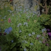 ★薄群青の小さな花