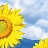 『菊次郎の夏』感想 ~「あの世」からの生還