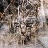 私には見えない 猫 さん③~ 霊感 のある友人達~